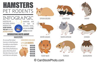 Hamster breeds icon set flat style isolated on white. Pet rodents collection. Create own infographic about pets