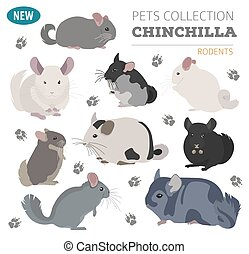 Chinchilla breeds icon set flat style isolated on white. Pet...