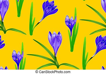 Purple Crocus Flowers - Spring flowers, purple blooming...