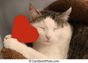 cat hold paper red heart with copy space close up portrait