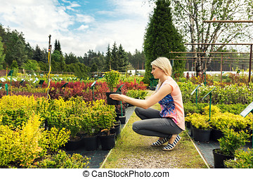 woman chooses barberry bush at plant nursery store