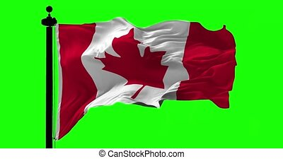 Canadian Blowing Flag on Green - Canadian flag blowing on...