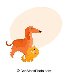 Cute, funny dog characters - Afghan hound and Pomeranian...