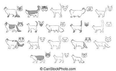 Set of cats breeds, side view, muzzle. Collection with hand drawn monochrome realistic illustration. part 2