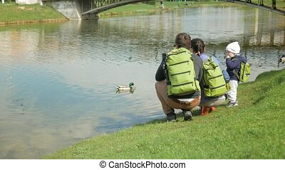 Young family is feeding ducks in a park near the lake. The little boy helps to throw food for birds into the water.