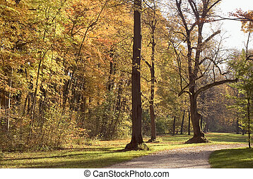 Forest Walkway with Autumn Colors
