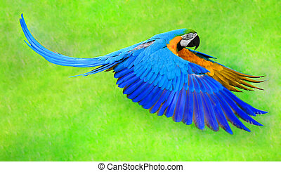 Flying macaw parrot isolated on the green background