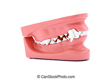 Dog teeth model - A model of an artificial complete healthy...