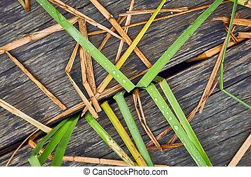 Plant and wood background
