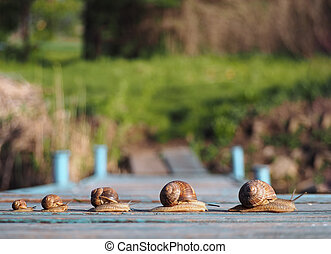 Snails family trip racing fast in one row
