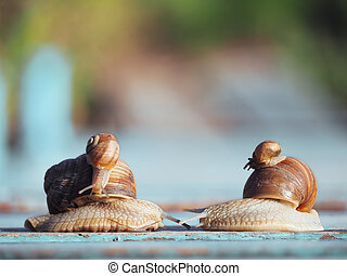 Snails family trip racing fast and furious