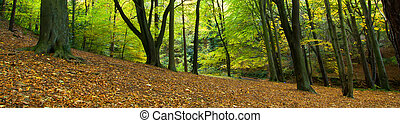 Ryton Willows - Autumn Scenic of Ryton Willows, woodland...