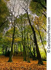 Ryton Willows - Autumn Scenic of Ryton Willows, woodland...