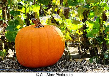 Pumpkin on a hay bale - Pumpkin sitting on a hay bale in...