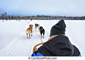 Man sitting in husky sledge in Lapland Finland