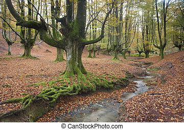 Wood of Otzarreta in autumn, Gorbeia, Alava, Spain