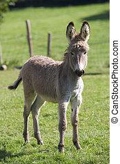 Animal donkey