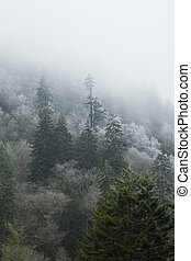 Frosty Morning on Newfound Gap Road, Great Smoky Mountains...