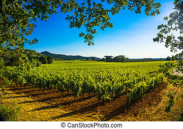 Bolgheri Castagneto vineyard and tree. Maremma Tuscany,...