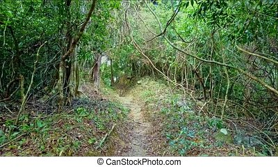 Close Aerial View Path Leads to Thick Wild Forest - close...