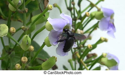 Beautiful bee pollinating purple orchid