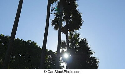 Sun shining through palm trees. The wind shakes the palm...