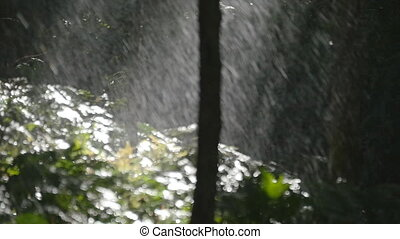 Green tree branches under the falling rain. Tropical rain in forest. Slow motion