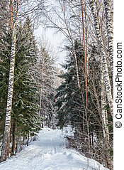 Winter forest landscape with snow in cold weather Karelia -...