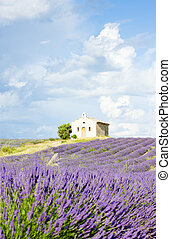 chapel with lavender field, Provence - chapel with lavender...