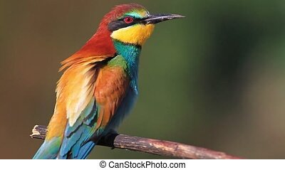 colored bird looking in different directions,wildlife, wild...