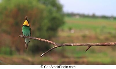 colored birds fly and sit on tree,wildlife, wild animals