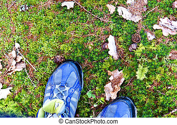 walk, stand, shoes, Hiking, trekking, moss, stone, leaves -...