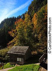 Trees on Mountain in Autumn