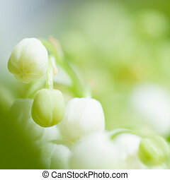 flowers Lily of the valley closeup