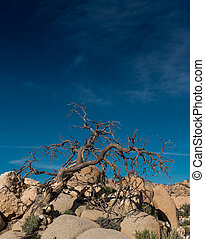 Gnarly Dried Tree On Rocks Below Blue Sky with faint clouds