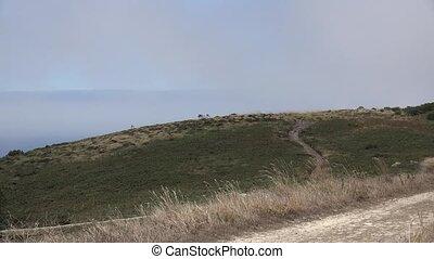 Windy Grass Hills And Haze