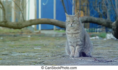 The gray cat sits on a stone pavement - A gray cat sits on a...