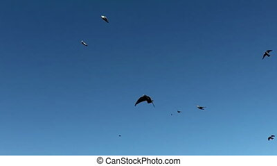 Flock of pigeons. A flock of birds against the sky. - Flock...