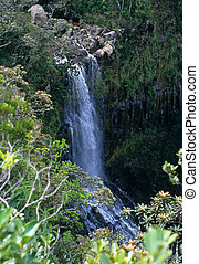 Waterfall in forest, Mauritius Island, Indian Ocean