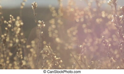 Abstract background of highlights, sun rays and dry grass....