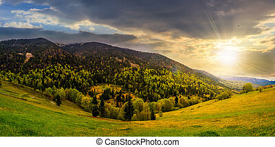 meadow with trees in mountains at sunset - mountain...