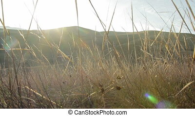 The camera is moving in the dry grass at sunset in the mountains