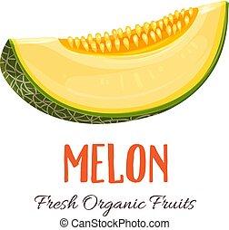 Vector melon illustration - Vector slice melon. Fruit...