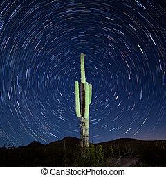 Saguaro Cactus Carnegiea gigantea Startrails Night - Iconic...