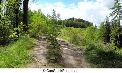 Walk on the forest road. - Walk on the forest road in the...