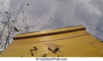 Bees fly near the hive against the blue sky. Slow motion. 30...