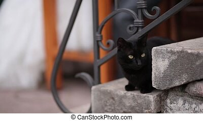 Cat on the old stairs in Perast, Montenegro.