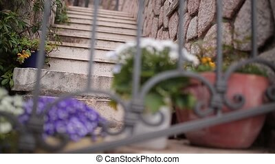 Flowers Osteospermum in a brown clay pot on the stairs and...