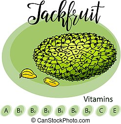 Hand drawn fruit illustration. Sweet jackfruit element....