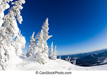 Winter landscape - View of snow-covered trees with blue...